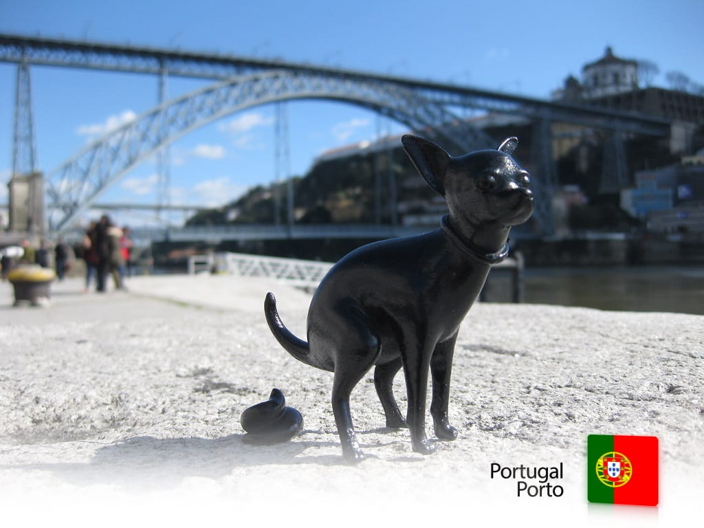 05-Puppy-portugal